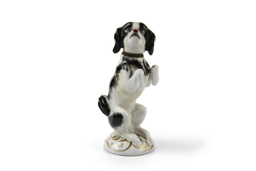 Spaniel dog perfume